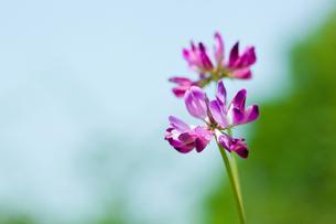 flower[weeds]A_06の写真素材 [FYI00445361]