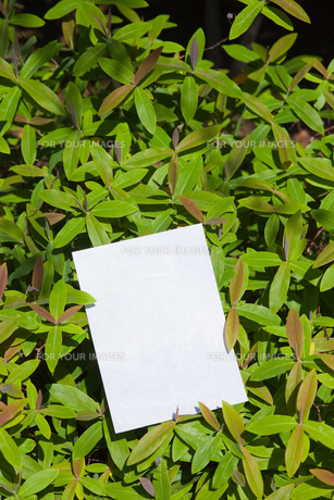 letter[leavesA]_20の素材 [FYI00445399]