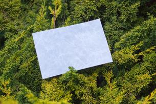 letter[leavesO]_20の素材 [FYI00445454]
