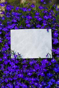 letter[violet]_03の写真素材 [FYI00445605]