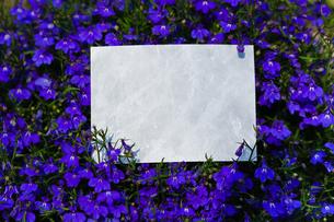 letter[violet]_02の写真素材 [FYI00445620]