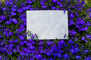 letter[violet]_01の写真素材 [FYI00445624]