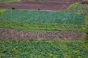 background[farmland]_02の写真素材 [FYI00445626]