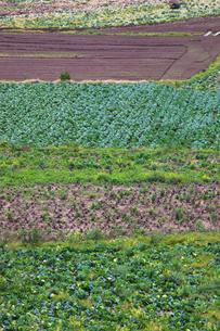 background[farmland]_03の写真素材 [FYI00445627]