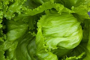 background[lettuce]_01の写真素材 [FYI00445647]