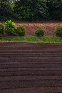background[farmland]_01の写真素材 [FYI00445651]