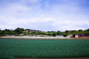 scene[long_green_onion_field]_15の写真素材 [FYI00445714]