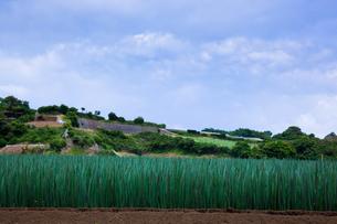 scene[long_green_onion_field]_13の写真素材 [FYI00445737]