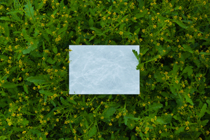 letter[chinese_yellowcress]_01の写真素材 [FYI00445766]