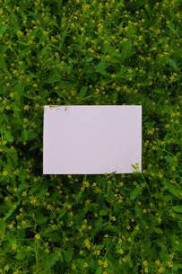 letter[chinese_yellowcress]_06の写真素材 [FYI00445770]