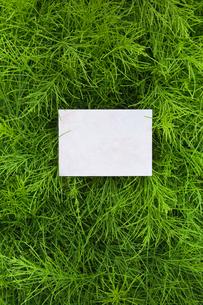 letter[horsetail]_12の素材 [FYI00445787]
