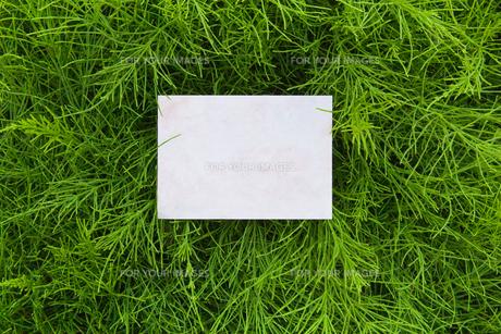 letter[horsetail]_13の素材 [FYI00445788]
