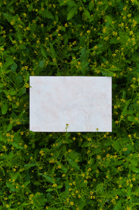 letter[chinese_yellowcress]_04の写真素材 [FYI00445796]