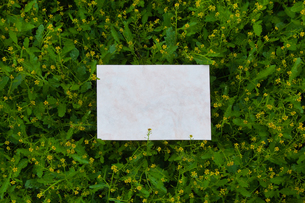 letter[chinese_yellowcress]_03の写真素材 [FYI00445797]