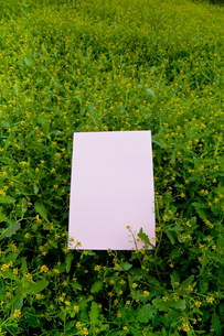 letter[chinese_yellowcress]_14の写真素材 [FYI00445832]