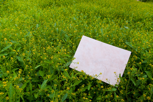 letter[chinese_yellowcress]_16の写真素材 [FYI00445836]