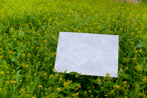 letter[chinese_yellowcress]_11の写真素材 [FYI00445837]