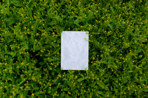 letter[chinese_yellowcress]_09の写真素材 [FYI00445838]