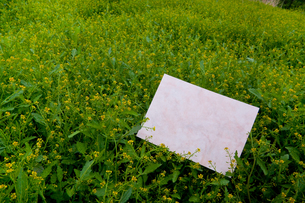 letter[chinese_yellowcress]_15の写真素材 [FYI00445841]