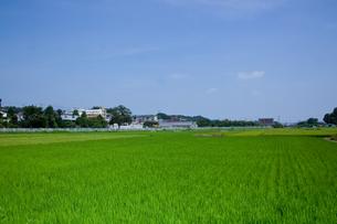 farm[paddy_field]_59の写真素材 [FYI00445981]
