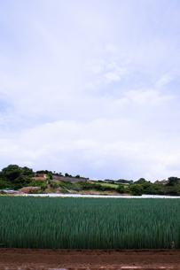 scene[long_green_onion_field]_12の素材 [FYI00446040]