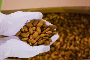 food[nuts]_08の写真素材 [FYI00446405]