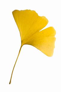 fallen_leaves_097の写真素材 [FYI00446418]