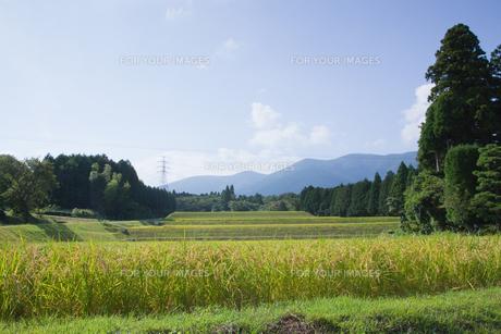scene[rice_paddy]_03の素材 [FYI00446420]