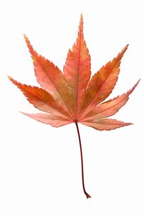 fallen_leaves_089の写真素材 [FYI00446427]