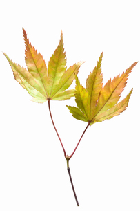 fallen_leaves_166の写真素材 [FYI00446429]