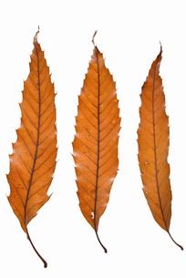 fallen_leaves_126の写真素材 [FYI00446433]