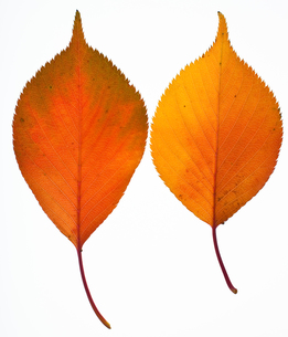 fallen_leaves_130の写真素材 [FYI00446434]