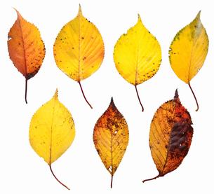 fallen_leaves_133の写真素材 [FYI00446435]