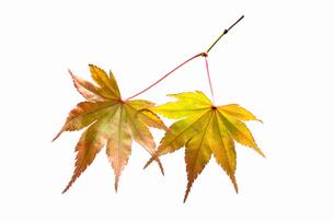fallen_leaves_170の写真素材 [FYI00446438]