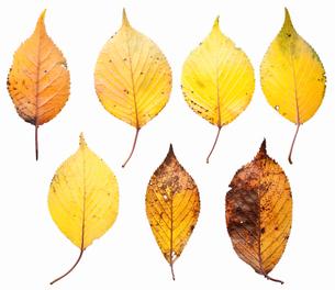 fallen_leaves_134の写真素材 [FYI00446439]