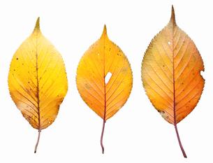 fallen_leaves_131の写真素材 [FYI00446440]