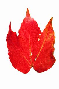 fallen_leaves_048の写真素材 [FYI00446442]