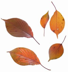 fallen_leaves_137の写真素材 [FYI00446443]