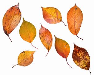 fallen_leaves_135の写真素材 [FYI00446444]