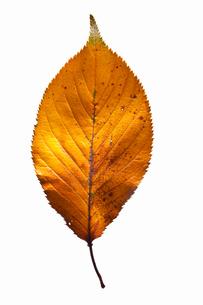 fallen_leaves_022の写真素材 [FYI00446446]