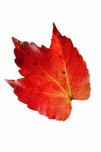 fallen_leaves_044の写真素材 [FYI00446447]