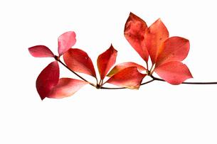 fallen_leaves_001の写真素材 [FYI00446449]