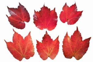 fallen_leaves_123の写真素材 [FYI00446451]