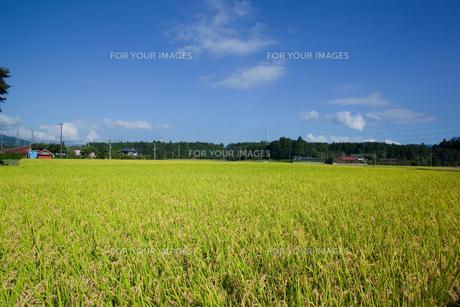 scene[rice_paddy]_20の素材 [FYI00446452]