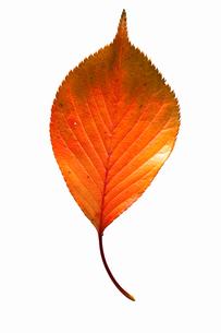 fallen_leaves_024の写真素材 [FYI00446455]