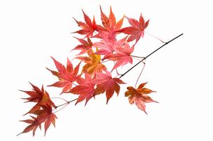 fallen_leaves_181の写真素材 [FYI00446456]