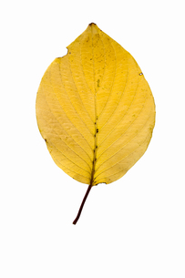 fallen_leaves_103の写真素材 [FYI00446457]
