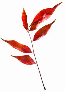 fallen_leaves_147の写真素材 [FYI00446458]