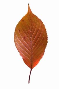 fallen_leaves_019の写真素材 [FYI00446459]