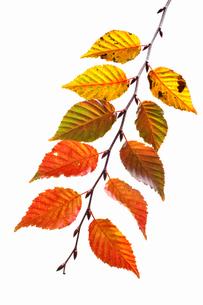 fallen_leaves_152の写真素材 [FYI00446460]